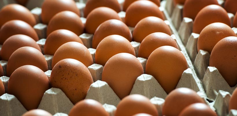 UK Egg production